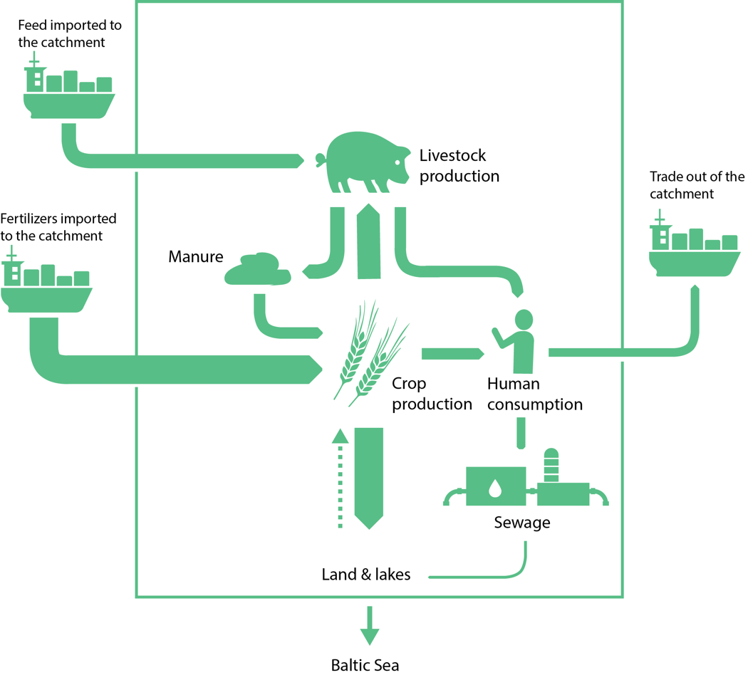 What Are the 4 Steps of Nitrogen Cycle? - Earth How |Wastewater Nutrient Cycle